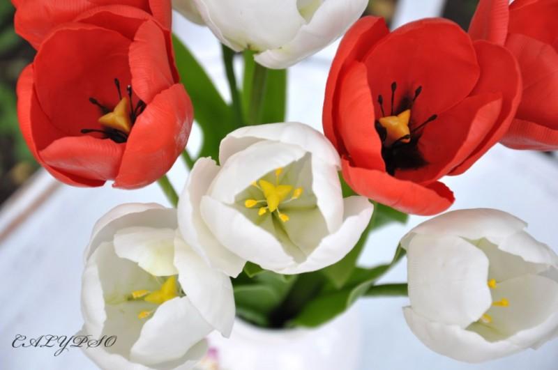 Тюльпаны Дыхание весны