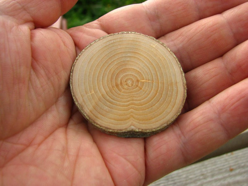 Поперечные спилы дерева разных размеров и пород дерева. Так же делаю разделочные доски.