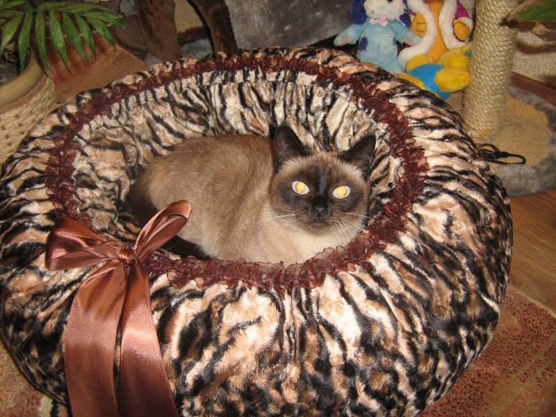 Для кошек своими руками мастер класс
