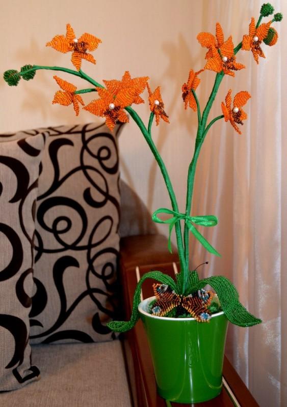 Апельсиновая орхидея)
