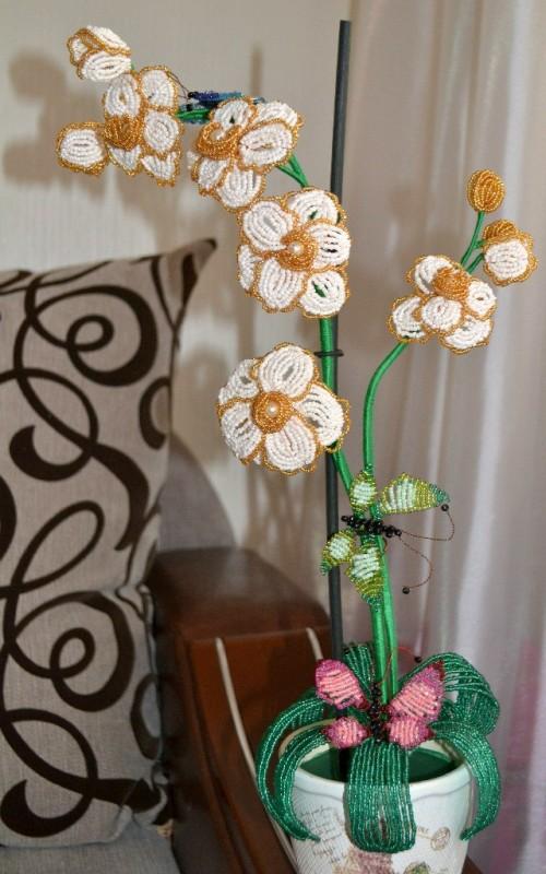 Бело-золотая орхидея