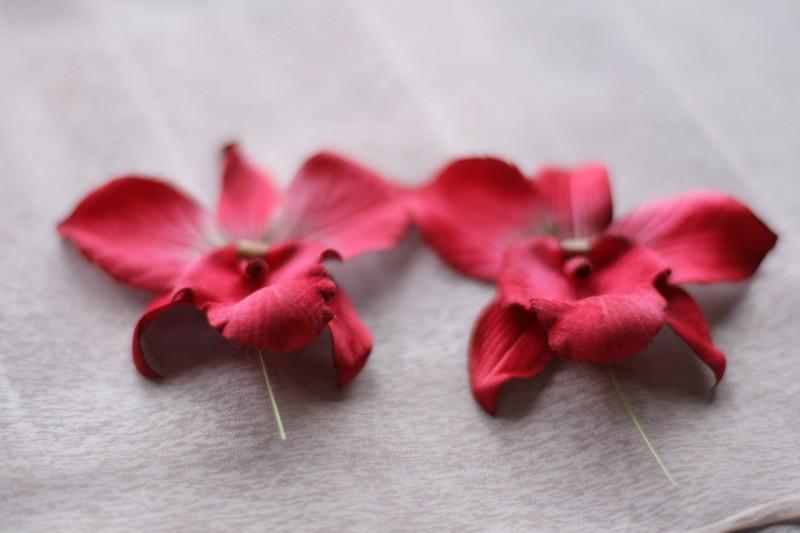 Бархатная орхидея
