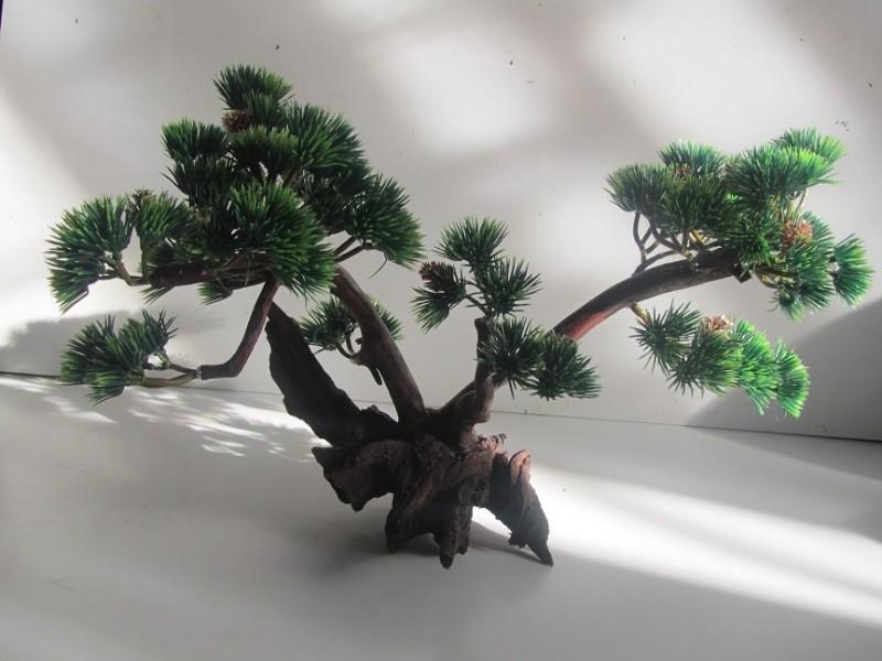 Бонсай на корне