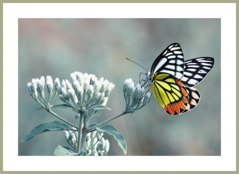 Багетная фотокартина Бабочка на цветке