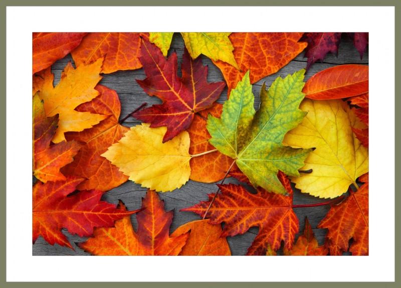 Багетная фотокартина Осенний этюд