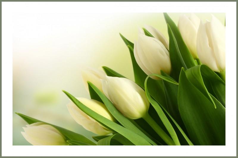 Багетная фотокартина Весенние цветы