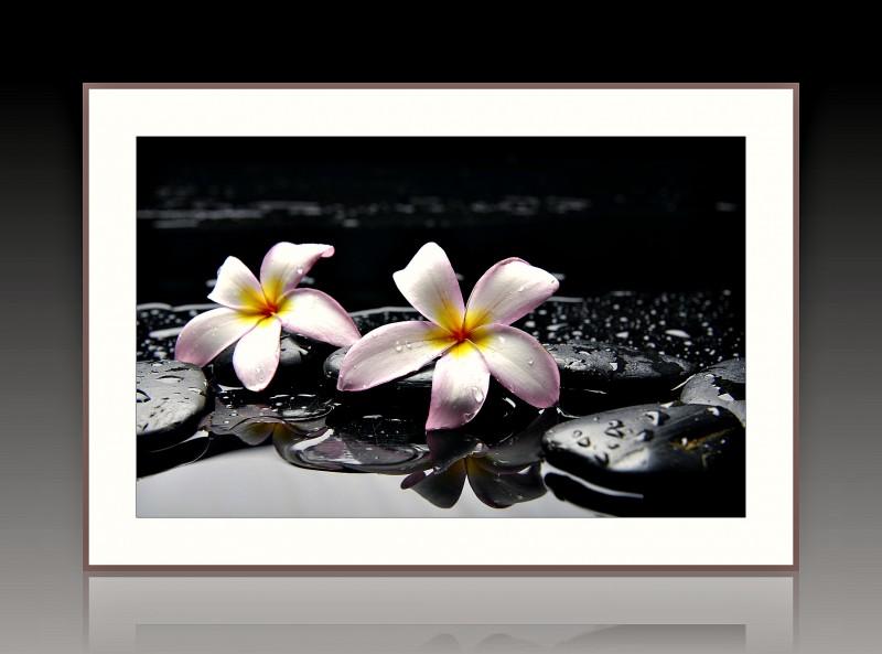 Авторская фотокартина Белые цветы на черных камнях