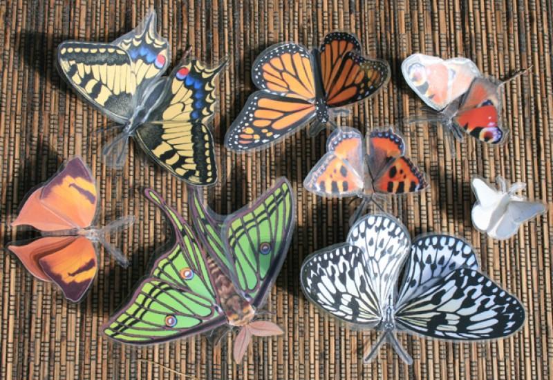 Бабочки, трехмерные модели