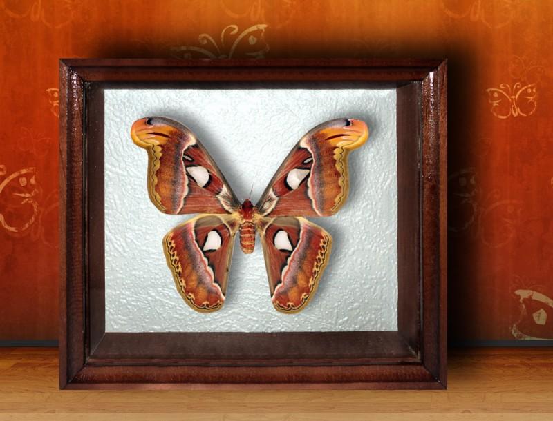 Бабочка в рамке