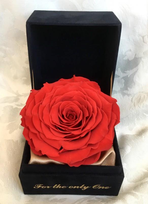 Стабилизированная роза XXL в бархатной шкатулке