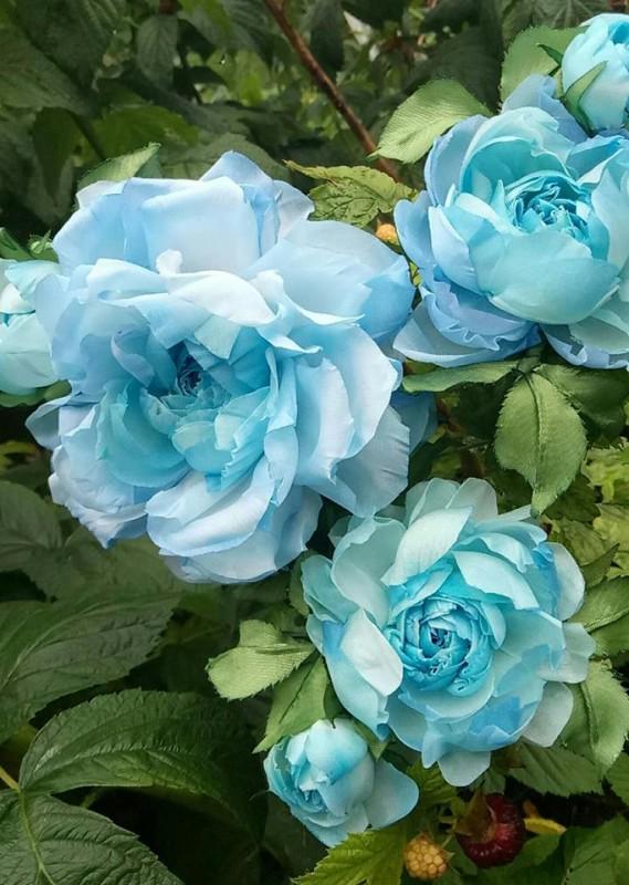Брошь роза «Голубая». Цветы из ткани