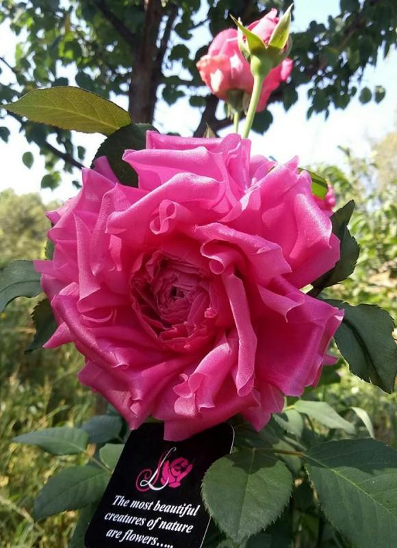 Брошь роза «Модерн». Цветы из ткани