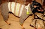 Вязаные комбинезоны для собак.