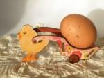 Пасхальный цыплёнок
