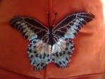 Бабочка Парусник Полимнестор
