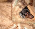 Плед  вязанный из собачьей шерсти.